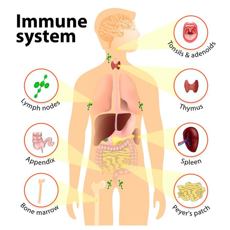 cod and the immune system