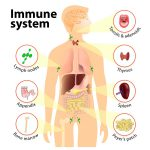 low immune system system
