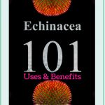 Echinacea uses and benefits