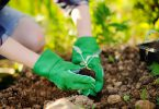 preparing your garden in the spring