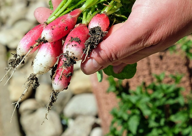 10 easiest vegetables to grow in your garden