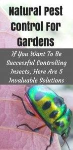 natural pest control for gardens