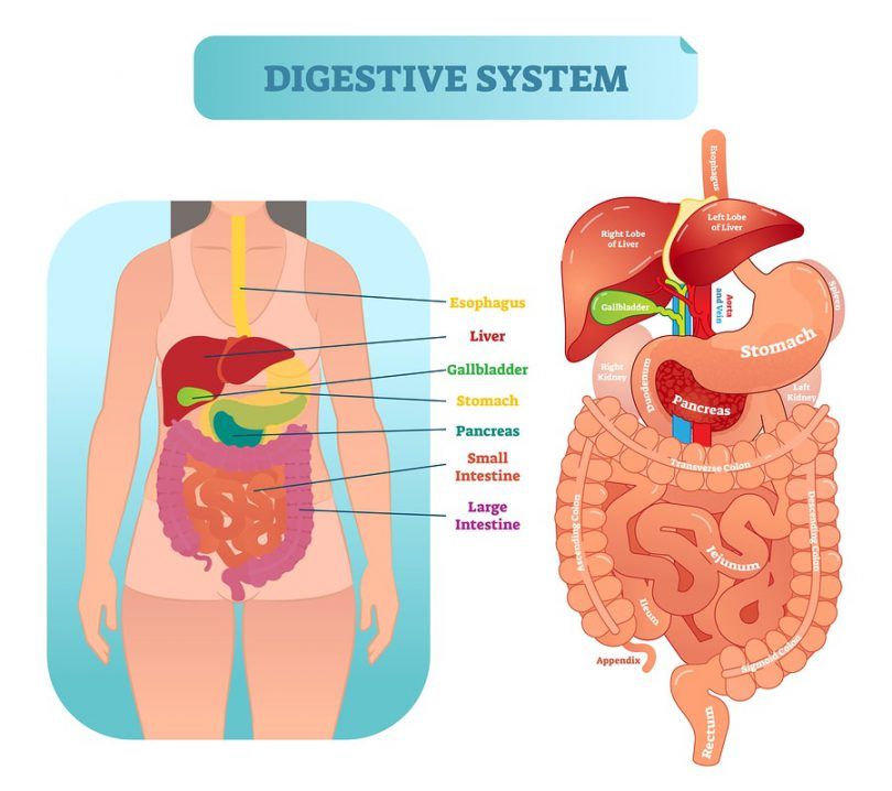 herbs for digestive health
