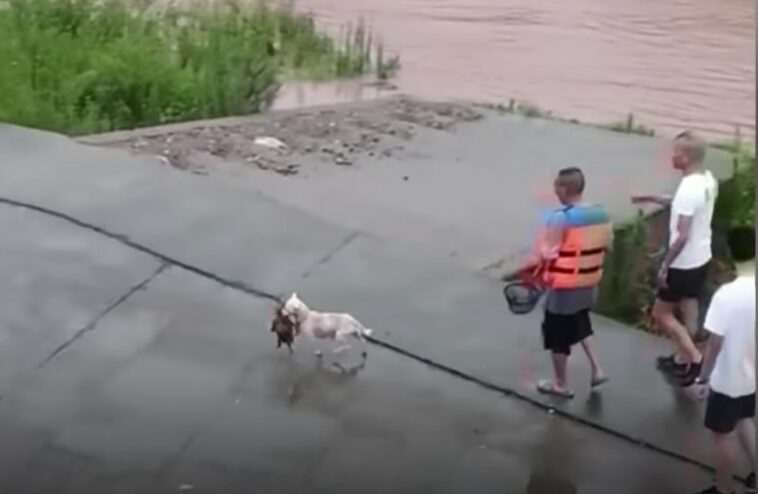 mother dog saves puppy from floods, mother dog saves puppy from floods video, mother dog saves puppy from floods video china