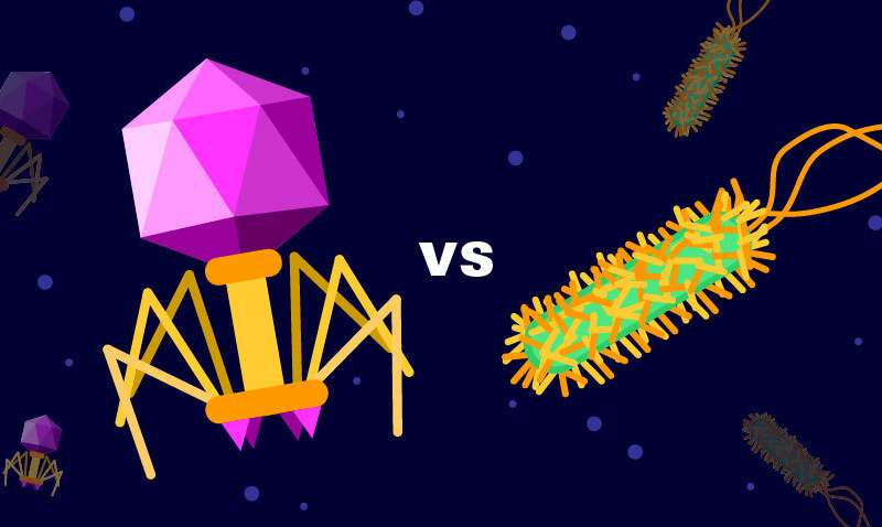How viruses and bacteria balance each other in the gut microbiome, microbiome, gut microbiome, digestive microbiome, bacteria and virus gut microbiome